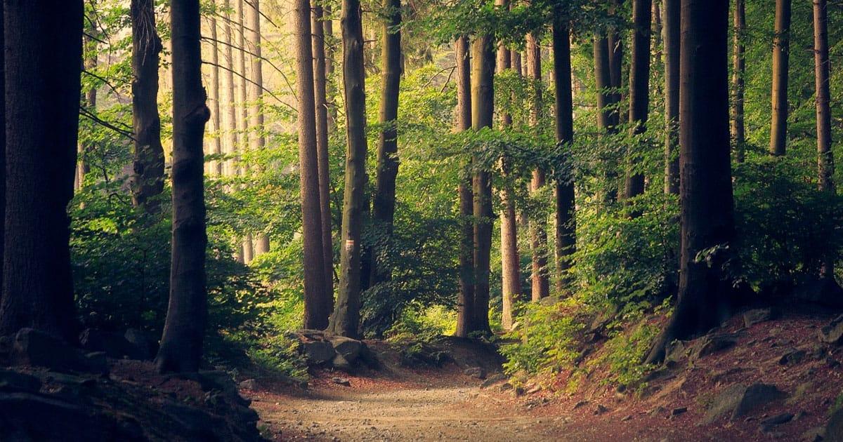 cammino-di-santiago-primitivo